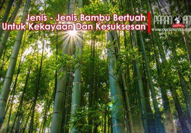 Jenis-Jenis Bambu Bertuah Dan Manfaatnya, Ada disekitar Anda