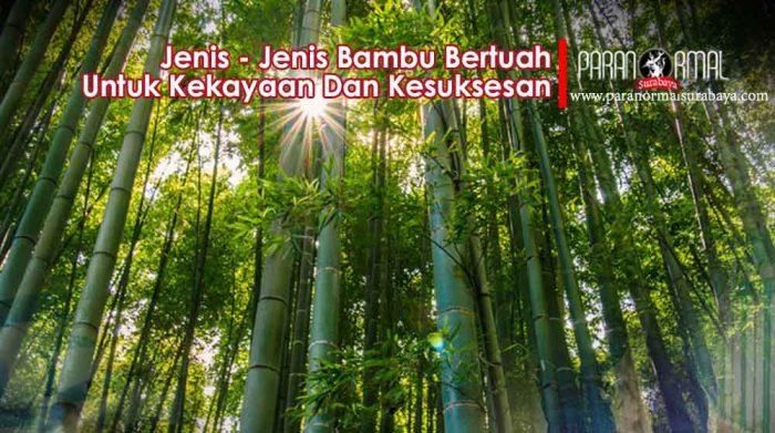 jenis bambu bertuah